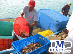 charola_calamar_pulpo_pesca de calamar_cordoba_dmplast_congelar marisco_congelar marisco