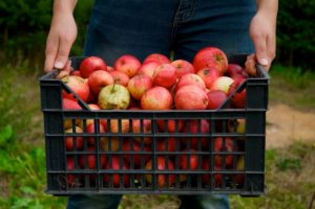 caja de plastico para recoleccion de manzana
