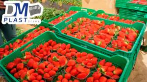 caja-plastica-para-fresa-strawberries-cesta-para-recoleccion-dmplast-3