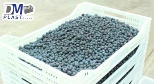 caja_contenedor_berries_arandano2