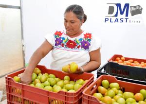 caja_tomatera_para tomate_dmplast-1