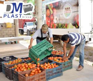 caja_tomatera_para tomate_dmplast-2