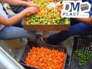 cesta-de-chile-habanero-de-yucatan-chile-verde-cajas-plasticas-dmplast-caja-para-chile-1