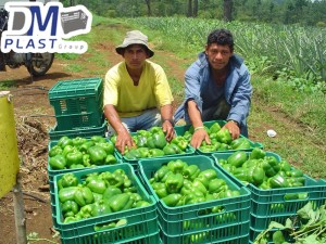 cesta-de-chile-habanero-de-yucatan-chile-verde-cajas-plasticas-dmplast-caja-para-chile-15