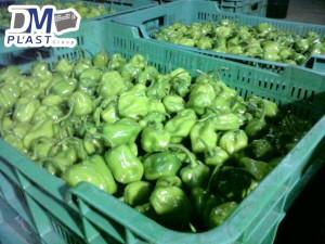 cesta-de-chile-habanero-de-yucatan-chile-verde-cajas-plasticas-dmplast-caja-para-chile-7