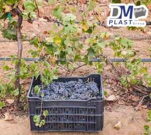 cesta-lechera-uvera-vinicola-ensenada-dmplast-4
