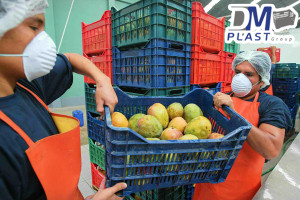 cesta_para_mango_dmplast_caja agricola_deshidratado de mango_15