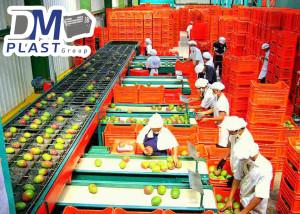 cesta_para_mango_dmplast_caja agricola_deshidratado de mango_17