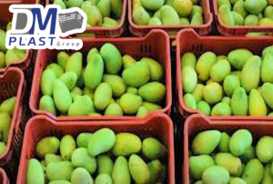 cesta_para_mango_dmplast_caja agricola_deshidratado de mango_21