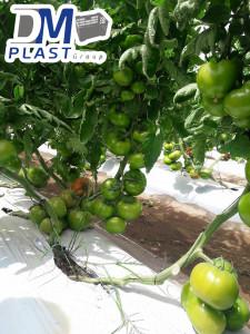 cuidados-del-tomate-dmplast-2