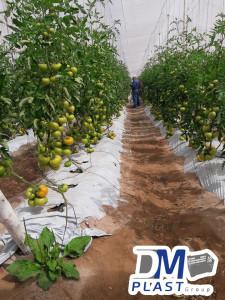 cuidados-del-tomate-dmplast-4