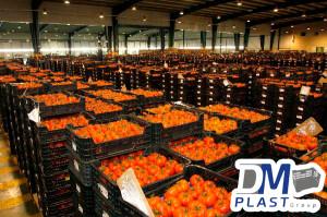 cuidados-del-tomate-dmplast-cajas para tomate-jitomate-7