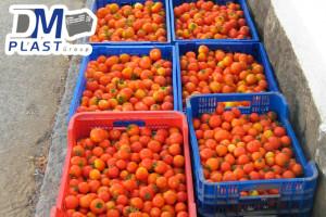 cuidados-del-tomate-dmplast-cajas para tomate-jitomate-9