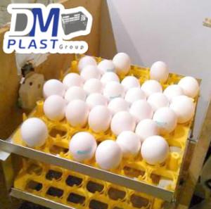 filler_para_huevo_charola_avicola_separador_de_huevos_dmplast_9